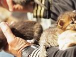 《爱猫之城》片段 新生喵