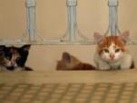 《爱猫之城》宣传曲《成片白鸥掠过》MV