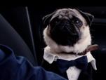 《我的冤家是条狗》发布陪伴版预告 当佛系女遇上心机狗