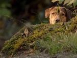 《一条狗的回家路》曝光国际版预告