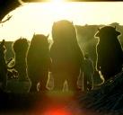 野兽家园#5