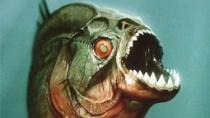 《食人鱼3D》先行版预告片
