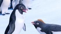《快乐的大脚2》曝片花 痴情企鹅为爱甘当铺垫