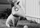蒂姆·波顿短片《科学怪狗》 孤独少年起死回生梦