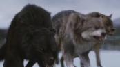 """""""暮色4:破晓下""""终极预告前瞻 泰勒狼变助贝拉"""