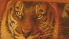 《少年派的奇幻漂流》中文片段 一人一虎触动人心