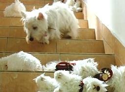 《我的狗狗我的爱》港版预告 宠物温情片元旦档映