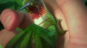 《森林戰士》終極預告 綠色撲面開啟正義保衛戰
