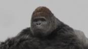 《大明猩》前导预告 棒球猩猩疾速挥棒栩栩如生