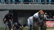 3D大片《大明猩》首尔开启宣传 发布剧场版预告