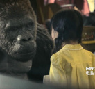 大猩猩和徐娇相依为命