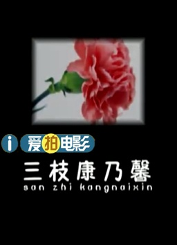 三枝康乃馨