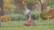 《火鸡总动员》中文片段 火鸡乱入人类陷阱作废