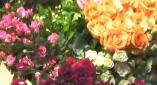 玫瑰·愛之旅