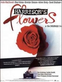 哈里逊之花