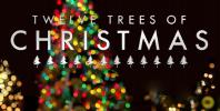十二棵圣诞树