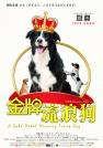 毛毅-金牌流浪狗