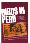 秘鲁的鸟儿