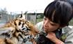 """""""90后""""女孩动物园工作 带大10只狮子、1只老虎"""