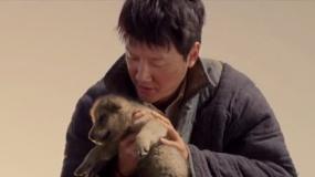《狼图腾》曝先导预告片 群狼狂奔冯绍峰草原激吻