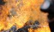 捷克动物园焚烧50公斤犀牛角 抵制非法交易