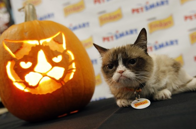 《不爽猫最糟的圣诞节》发预告 塔塔酱银幕首秀