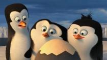 《马达加斯加的企鹅》角色特辑 菜鸟小弟初出茅庐