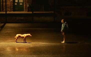 《白色上帝》精彩预告 少女和爱犬的灵魂沟通