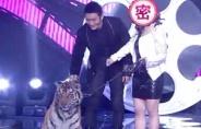 《来吧!灰姑娘》盛大开播 黄晓明和老虎亲密接触