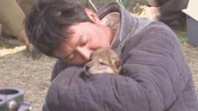 《狼图腾》冯绍峰提前当爹 面对小狼崽父爱大爆发