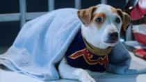 《罗素的疯狂》萌趣预告片 流浪狗变身超级拳手