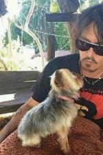 德普偷带爱犬进澳大利亚 或面临最高10年监禁