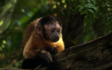 《萌猴奇遇记》剧情预告 萌猴意外空难落丛林求生