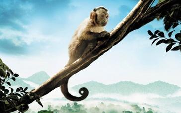"""""""亚马逊萌猴""""视觉盛宴 遇强敌仍有高上座率"""