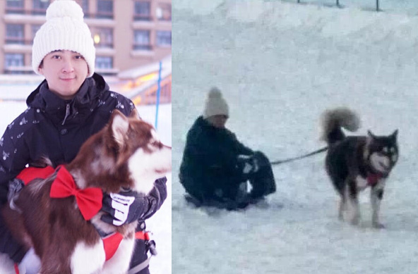 首富的儿子好会玩!王思聪坐雪橇爱犬绑绳子拉