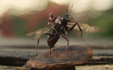 """漫威《蚁人》美在何处 """"蚁""""小博大呈现微观世界"""