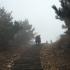 玩命!赵薇顶雾霾爬到山顶 眼前白茫茫啥也看不见