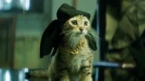 《拯救猫咪》中文预告 中二青年深入黑道救萌猫