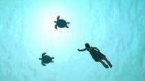 《红海龟》预告片 男人欲离开荒岛被红海龟破坏