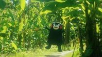"""《美丽的人》中文预告 惊现人气""""部长""""熊本熊"""