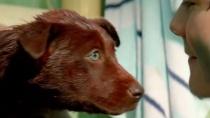《红犬历险记》中文修复版预告 圣诞节后影院重映