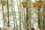 """电影《捉妖记2》已于10月15日正式开机,""""胡巴之父""""导演许诚毅携主演白百何、井柏然等原班人马重聚打造续集。电影《捉妖记》以极富想象力的故事、国际顶级的制作水准、群星精彩爆笑的演绎实力登顶2015年票房冠军,票房与口碑双丰收。"""