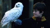《哈利·波特与魔法石》片段4 上学