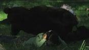 《非诚勿扰》 片段7大灰狼