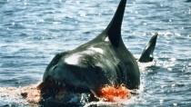 《大白鲨》预告片