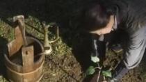 《妈妈的树》 电影预告片3