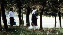 《橄榄树下的情人》  预告片