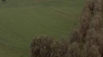 《橄榄树下的情人》 结尾片段