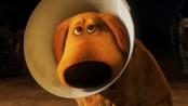 《飞屋环游记》特辑 会说话的狗