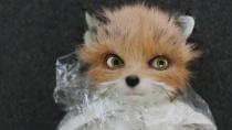 《了不起的狐狸爸爸》特辑 完善细节